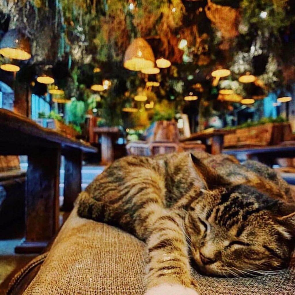 Кот в ресторане Sempre